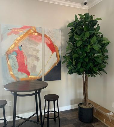Large Fiddle Leaf Tree in hospitality suite