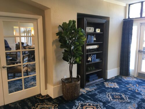 Fiddle Leaf Fig in Basket in hospitality suite