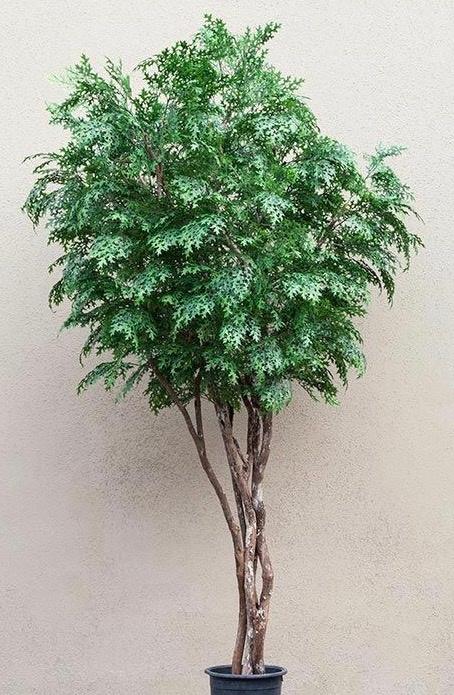 Custom Artificial Pin Oak Tree
