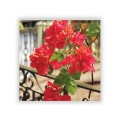 bougainvillea silk flower