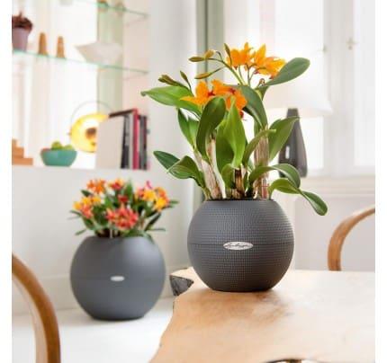 Lechuza Puro round planter