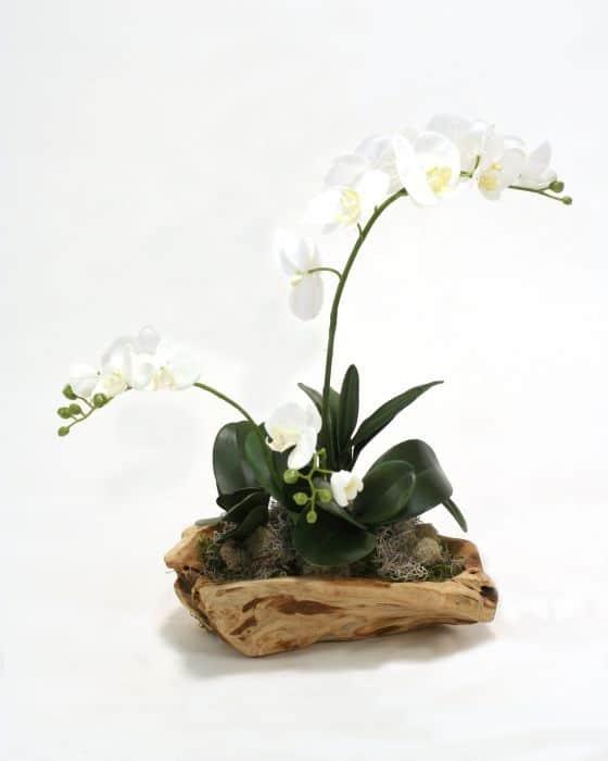 white orchids on log arrangement