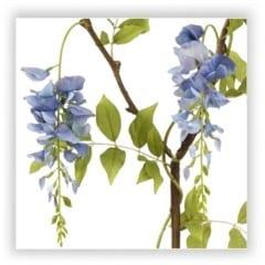 wisteria branch