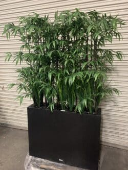 Outdoor Bamboo with grasses