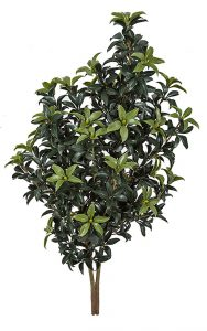 "50"" Outdoor Mountain Laurel Bush"