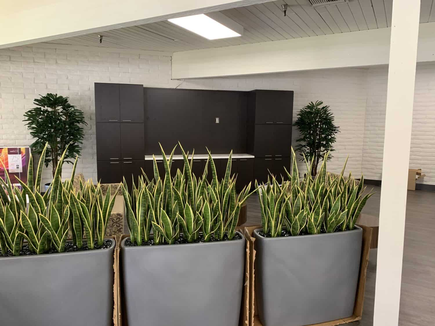 artificial Sansevieria in lateral planter