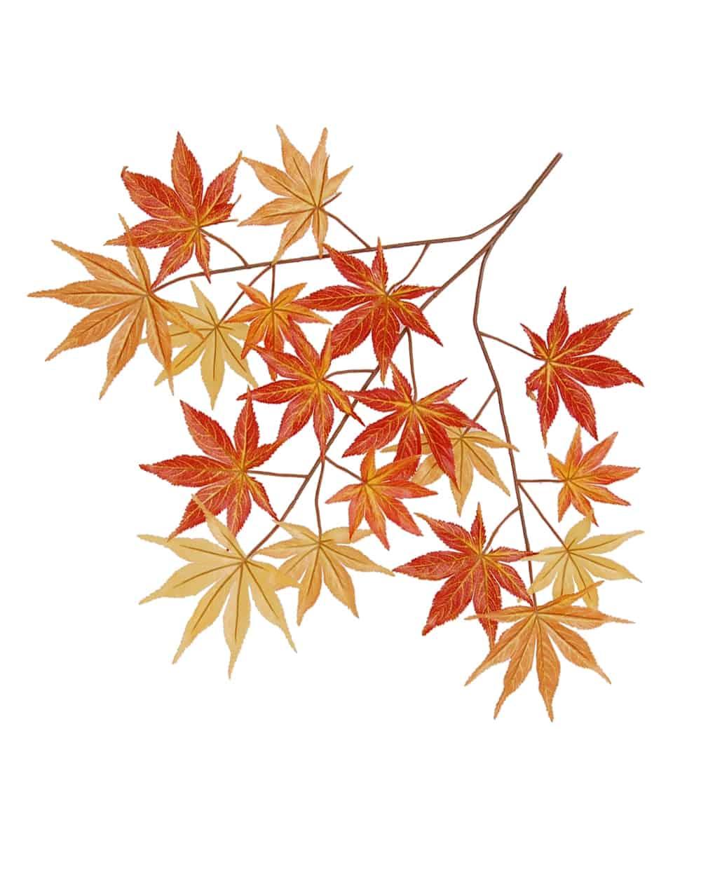 Autumn Japanese Maple spray